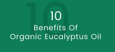 Benefits of Organic Eucalyptus Radiata Oil and Creams
