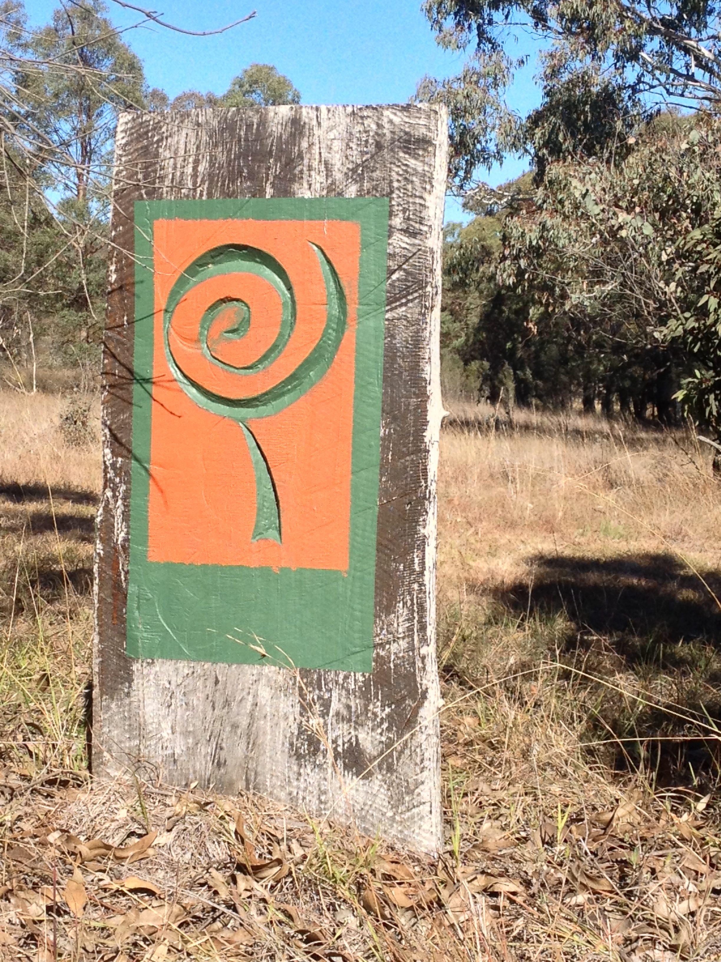 10 Benefits Of Eucalyptus Radiata (Australiana) Oil - Banalasta